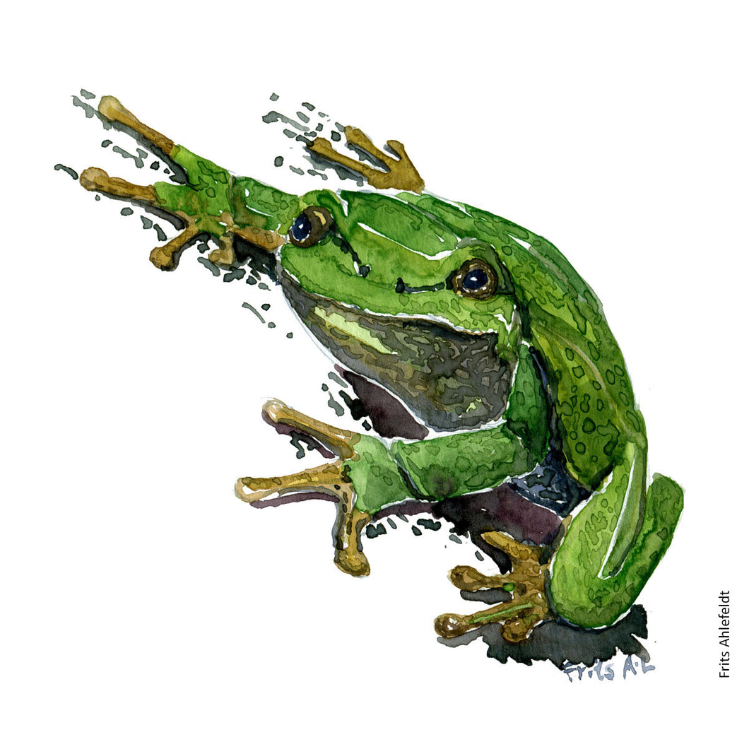 Dw00003 Download European tree frog watercolor