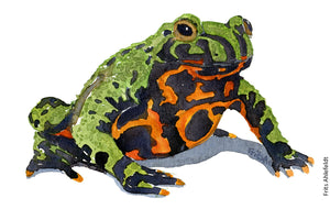 Download Fire bellied toad watercolor