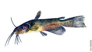Brown Bullhead freshwater fish watercolor by Frits Ahlefeldt