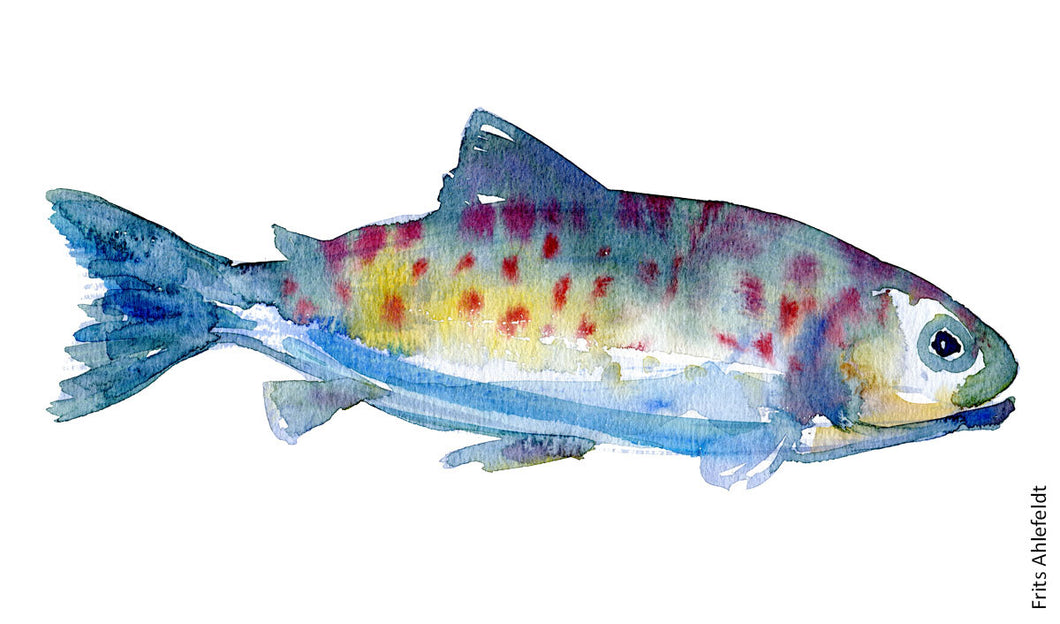 Trout (forelle, oerred) Freshwater fish watercolor by Frits Ahlefeldt