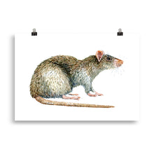Load image into Gallery viewer, Brown Rat art print