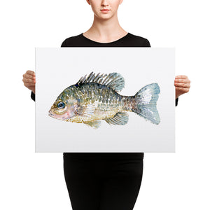 Pumkinseed Sunfish Watercolor Canvas print