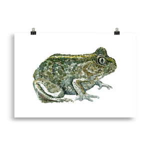 Common Spade toad watercolor Art print