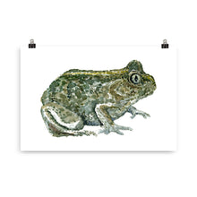 Load image into Gallery viewer, Common Spade toad watercolor Art print