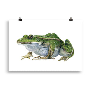 Edible Frog watercolor Artprint