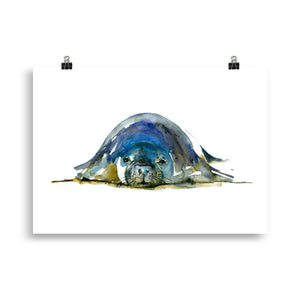 Monk Seal Watercolor Art Print