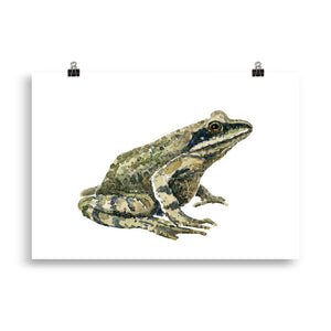Moor frog watercolor Art print