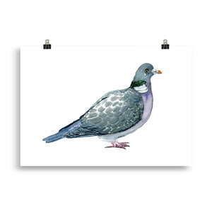 Common wood pigeon art print