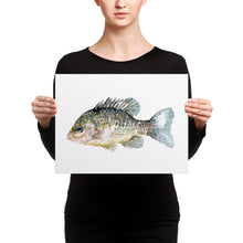 Load image into Gallery viewer, Pumkinseed Sunfish Watercolor Canvas print