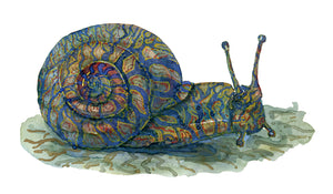 Original Tribal snail ground Watercolor