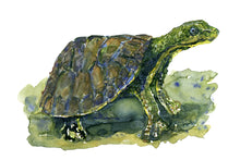 Load image into Gallery viewer, Original Scared turtle Watercolor