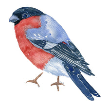 Load image into Gallery viewer, Eurasian bullfinch - dompap frits ahlefeldt watercolor