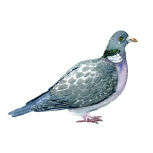 Load image into Gallery viewer, Common wood pigeon art print