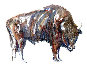 Watercolor of European Bison (Buffalo, Wicent ) Biodiversity illustration By Frits Ahlefeldt