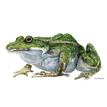 Load image into Gallery viewer, Edible Frog watercolor Artprint