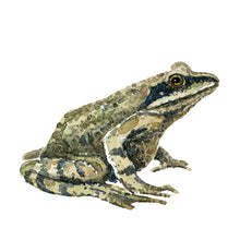 Load image into Gallery viewer, Moor frog watercolor Art print