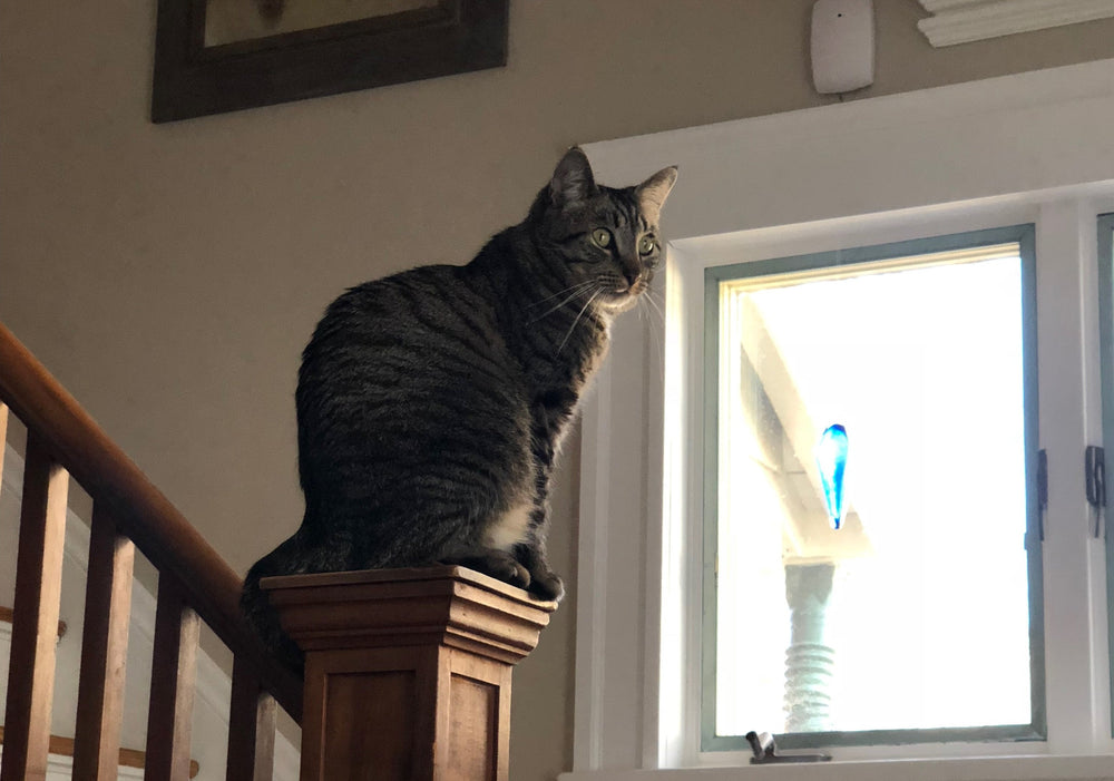 Basepaws Cat Story: The New Adventures of Clark The Supercat