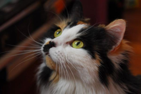 Basepaws Cat Stories: The Tale of Sylvia - The Goddess of the Forest