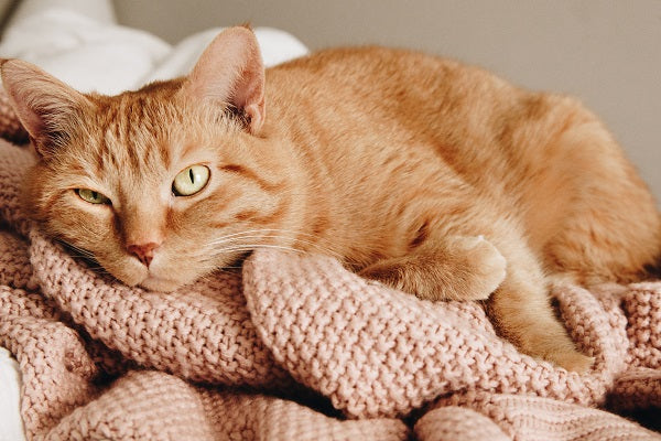 an orange tabby cat with yellow eyes laying on a dusty pink blanket