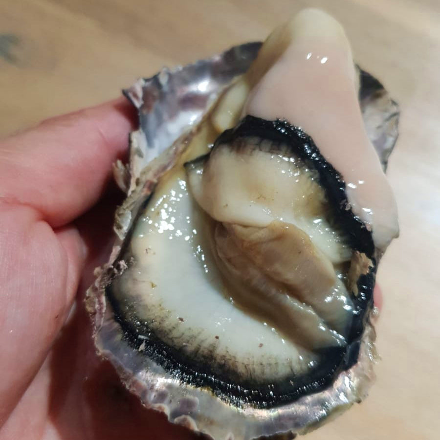 julOME hyogo fresh succulent oyster