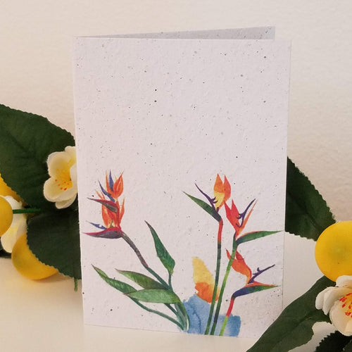 Birds of Paradise Growing Paper Greeting Card || All Occasion