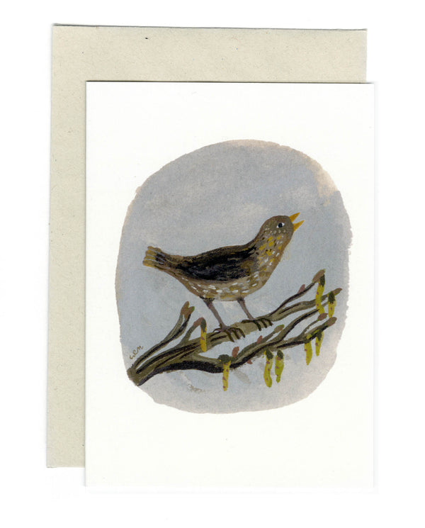Song Thrush a6 card