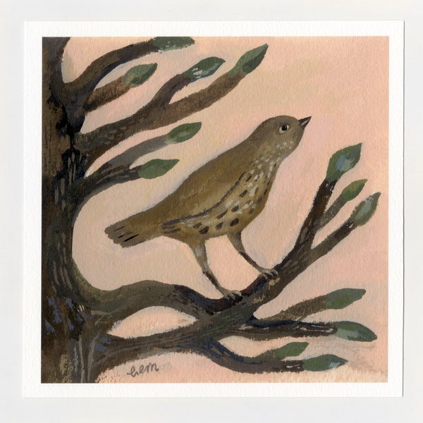 Song Thrush and Buds 7x7 print