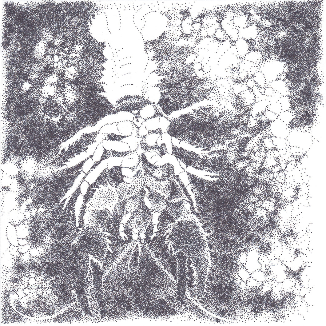 Crawdad, Original Drawing