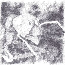 Load image into Gallery viewer, Portrait of an Ant, Original Drawing