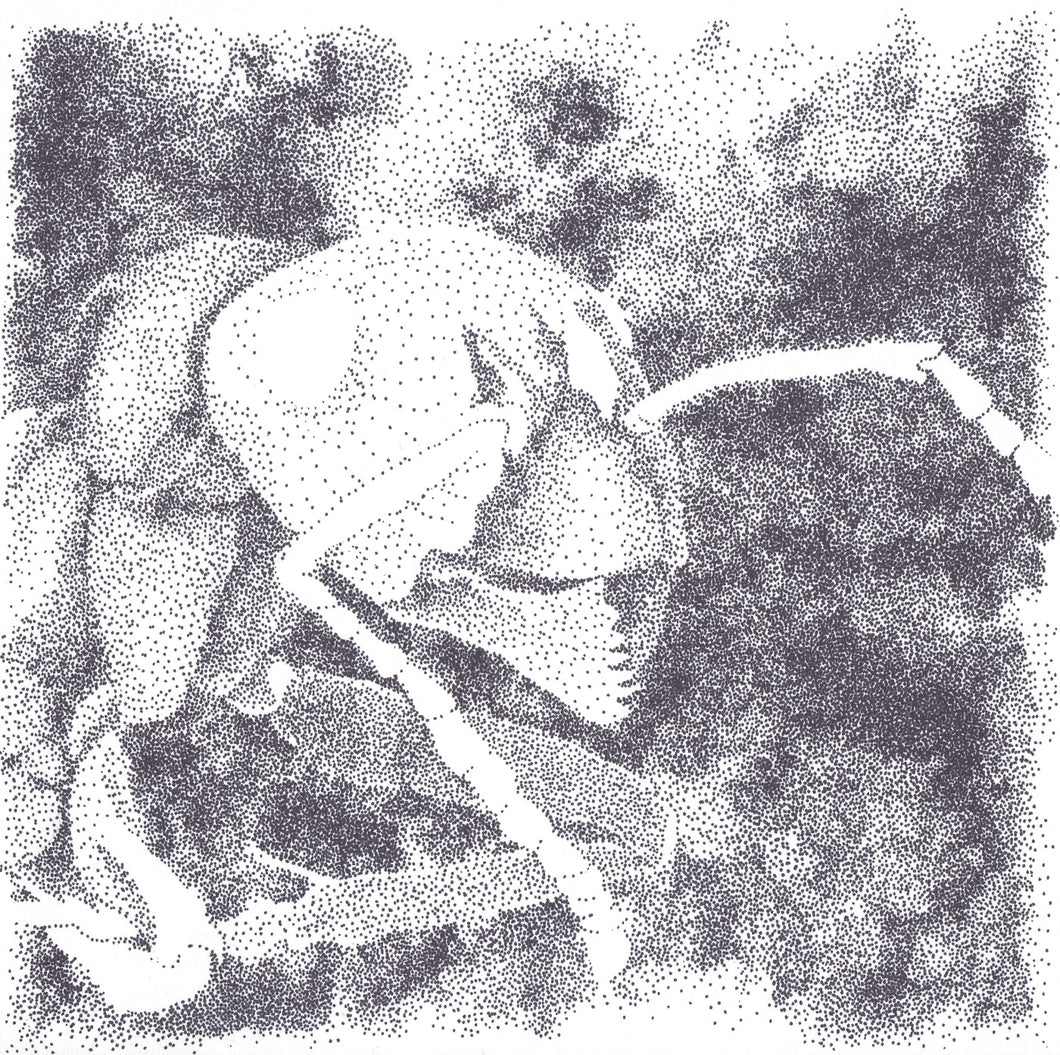 Portrait of an Ant, Original Drawing