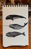 Small Whale Notebook