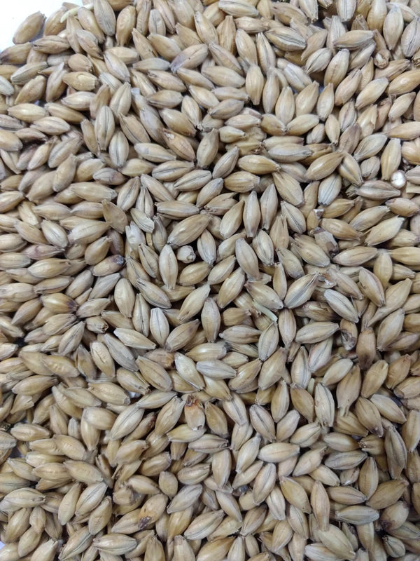 Best-malz-best-malt-hop-works-brewing-supplies-homebrew- home-bre
