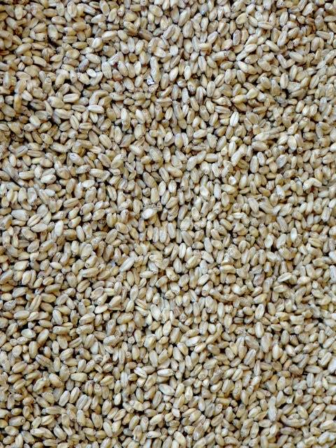 Voyager-craft-malt-hop-works-brewing-supplies