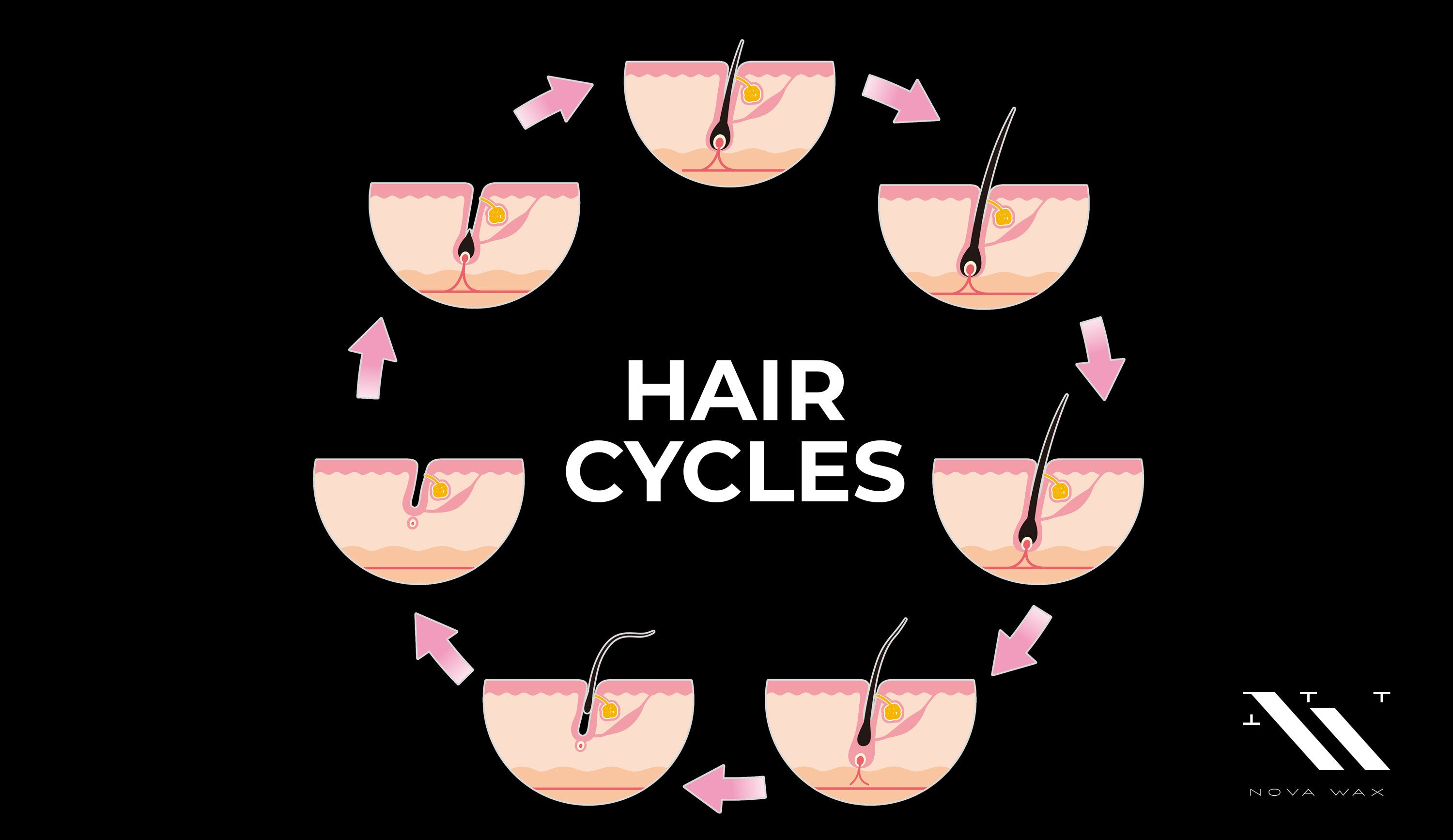 Hair Cycles