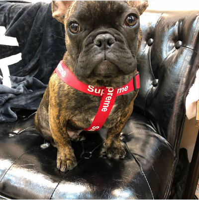 Luxury Pupreme Harness