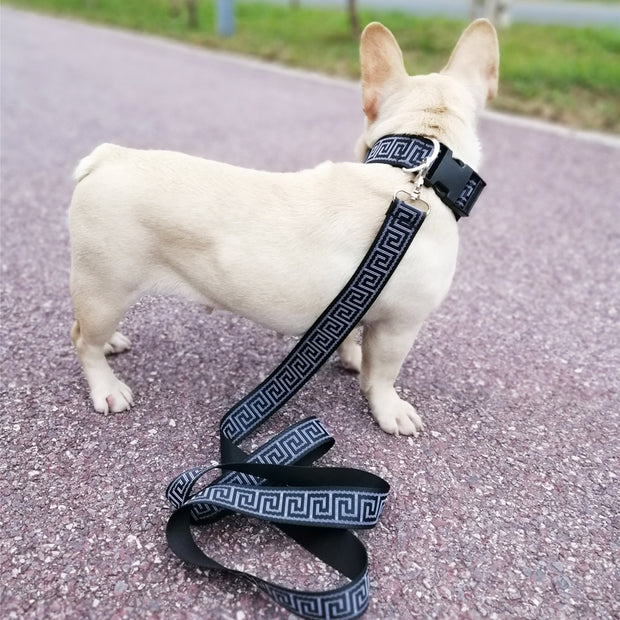 Versace Inspired Leash and Collar