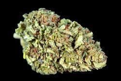Image of Hawaiian Haze