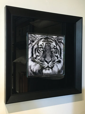"""Tiger"" tempered glass photography"