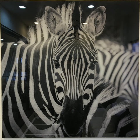 """Zebra"" tempered glass photography - IN STORE CLOSING DOWN CLEARANCE now $99 !"