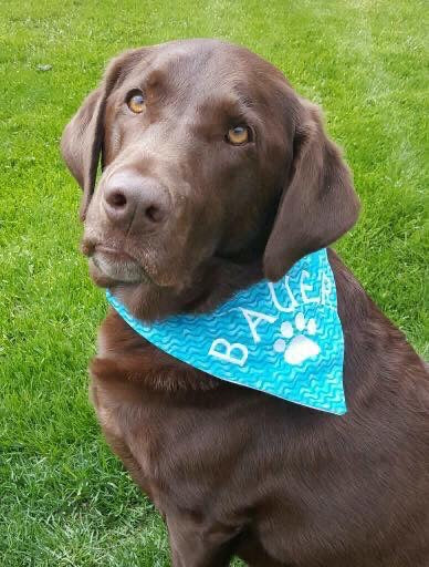 Dog Bandana - Green Camo