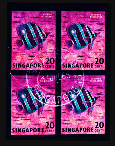 20 Cents Singapore Butterfly Fish (Hot Pink), 2018