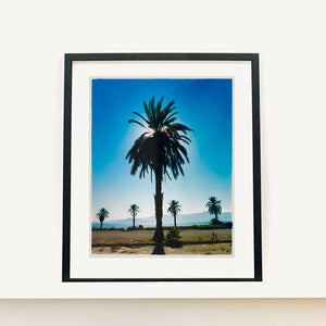 Classic Palm Tree Print, against a blue sky above desert, mountains and sea.