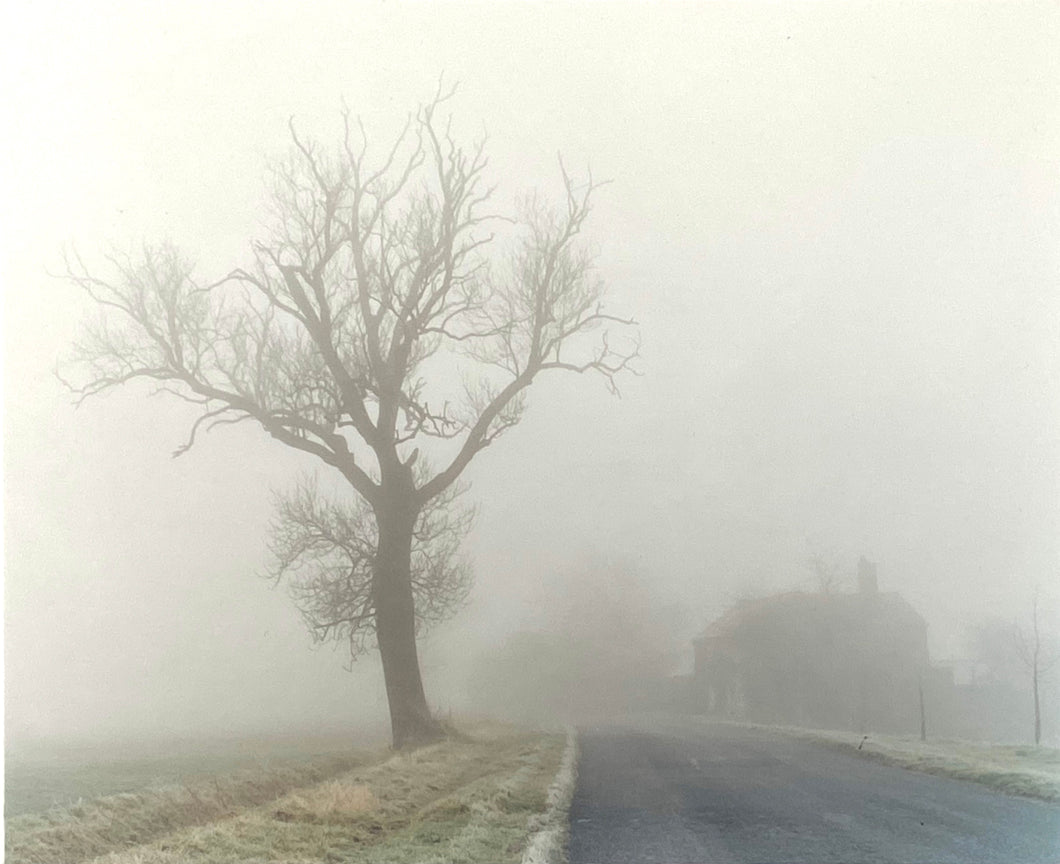 A set of photographs that followed a straight line. The images would go through, over and under what ever came in the path of the camera's lens: tree, fog, house, road, frosty grass.