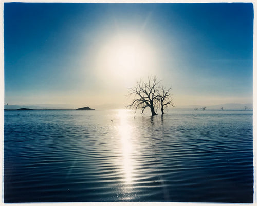 Towards Rock Hill, photographed by Richard in Bombay Beach, Salton Sea, California. The horizon intersected by sun rays, featuring a tree unexpectedly rising out of the lake gives this piece an ethereal quality.