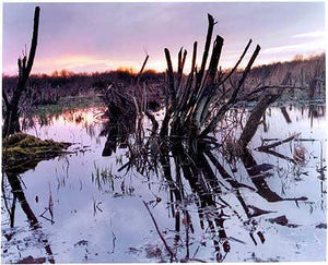 Sedge Fen, Wicken Fen 2002