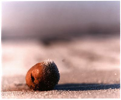 0°00' longitude, 52°35N' latitude, Frozen Potato, Wisbech St Mary's Wash, 2000