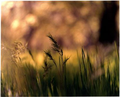 Grass, Zion National Park, Utah 2000