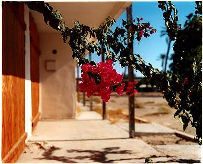 Bougainvillea, North Shore Motel, Salton Sea, California 2003