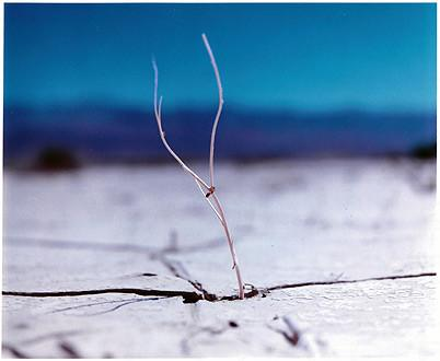 Panamint Valley I, Death Valley National Park, California 2000