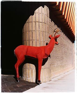 Deer II, Ely, Nevada 2003